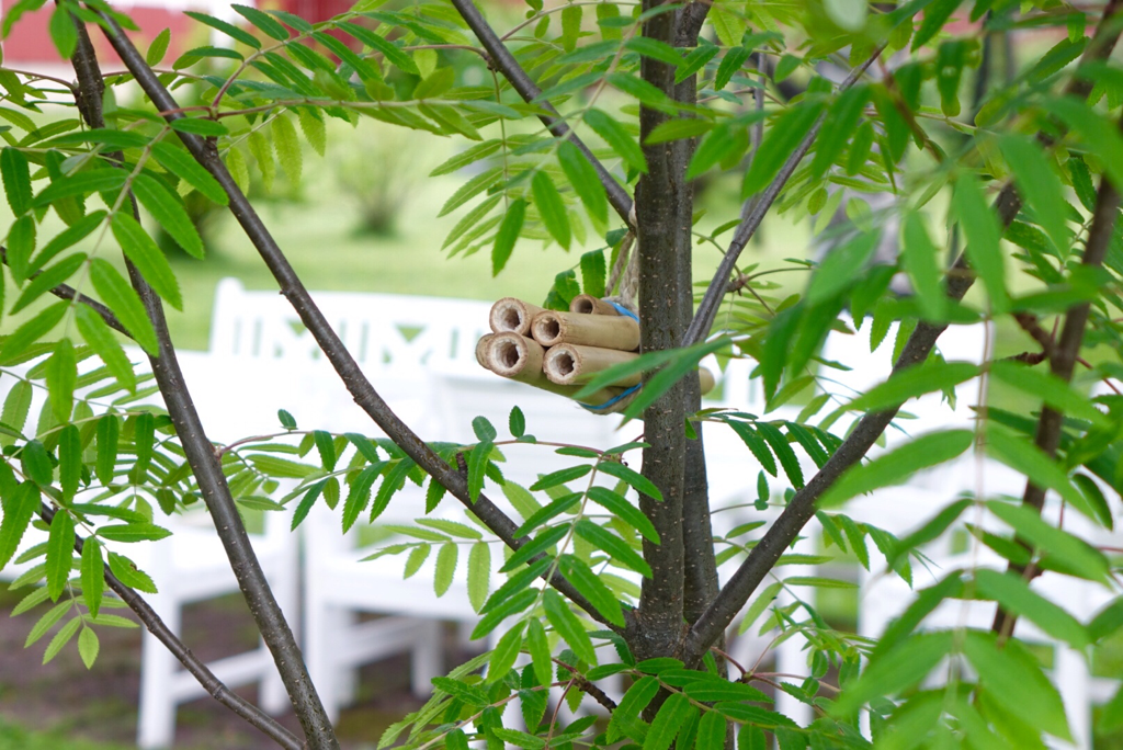 Bihotell med bambupinnar